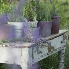 Provencal garden 1