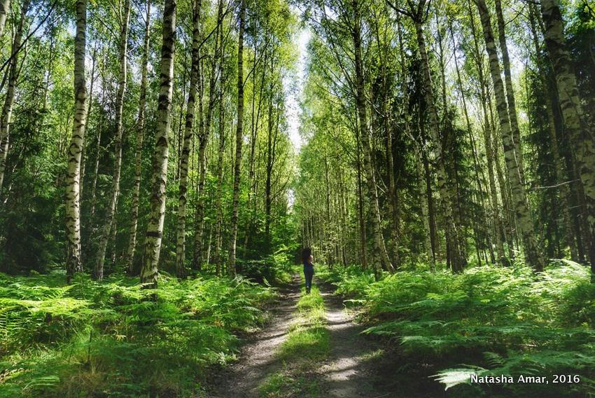 Running in the forest in the Stockholm Archipelago