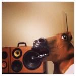 Horse Head BoomCase - NJ