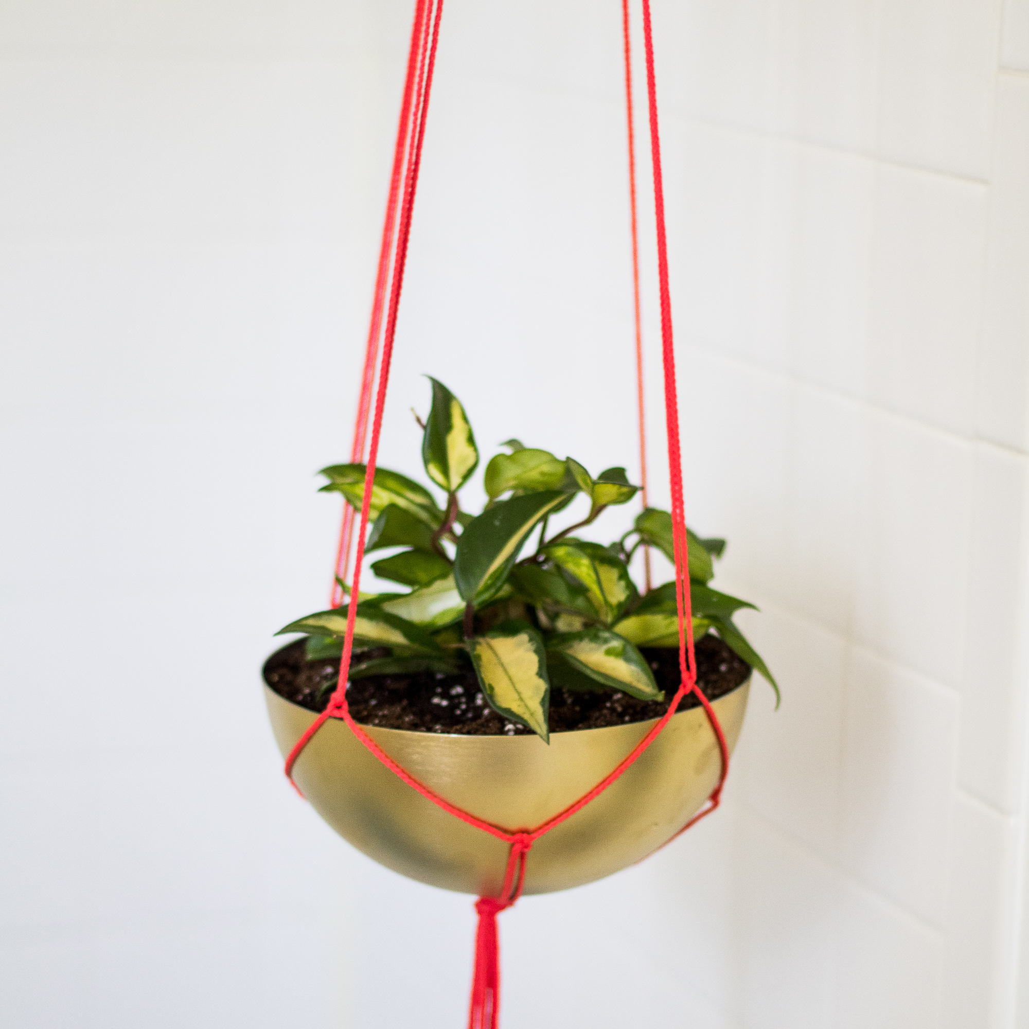 Hangplant Ikea Diy Brass Hanging Planter The Easiest Ikea Hack Ever
