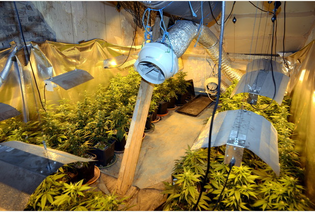 13/04/2015 Pic by: Penny Cross  Police have uncovered  a major cannabis factory in a top floor flat on Tavistock Place.  Reporter: Carl Eve