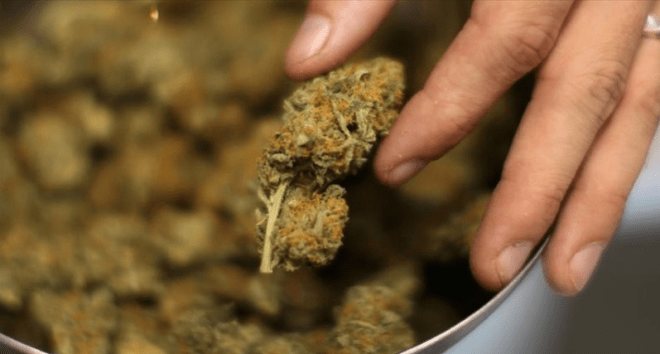 Federal court says cops can't search drivers for living in states where pot is legal RawStory