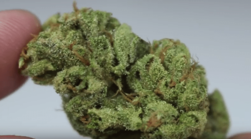 Key Lime Pie - (Strain Review) - Strain Central