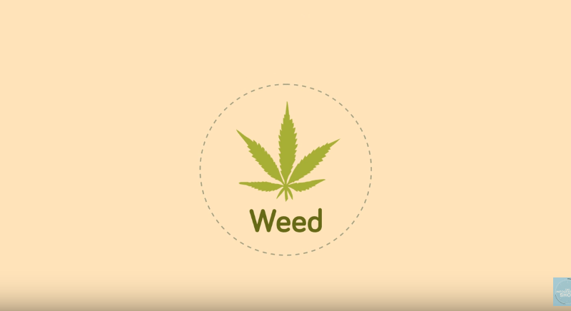 Weed12 Interesting Facts You Should Know