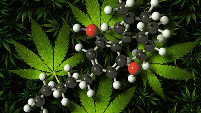 cannabis-based-products-are-medicine