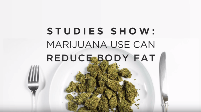 marijuana-use-can-reduce-body-fat-weedmaps
