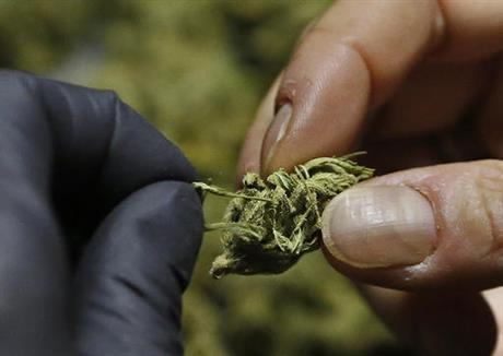 san-jose-bans-marijuana-sales-ahead-of-california-state-vote