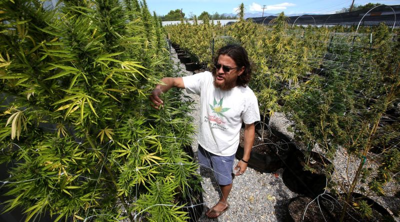 supporters-foes-of-legalized-marijuana-in-late-push-to-sway-vote