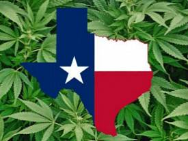 texas-cannabis-report-logo
