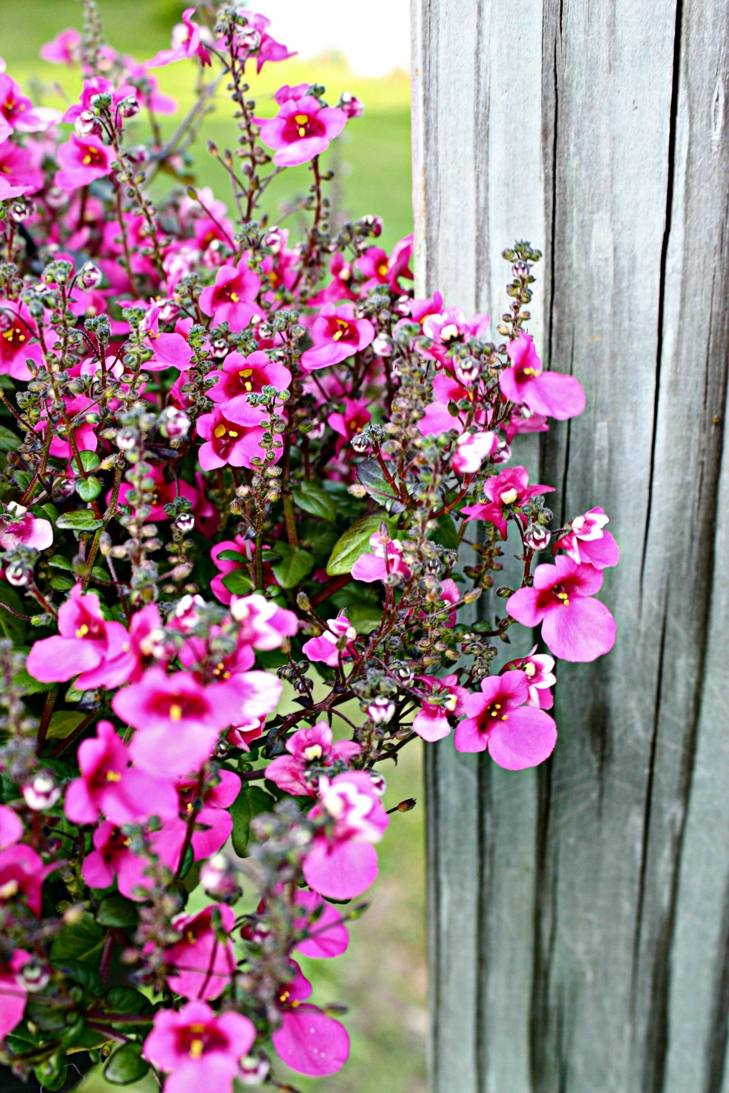 littlepurpleflowerbasket
