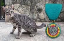 Our 2016 Fiesta Medal Cat Model: Screwy, Lavaca Community Cat