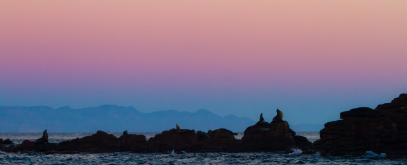 California Sea Lions Resting At Isla Los Islotes Before Dawn, Gu