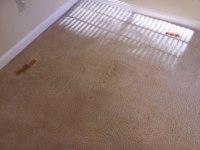 Carpet Tips | CitruSolution Carpet Cleaning of West Cobb