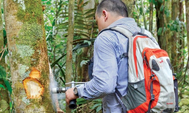 Henry Arellano measures carbon in tropical forests