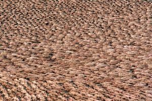 Artist Spencer Tunick photographs hundreds and even thousands of nude subjects for projects around the world.
