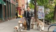 justin_silver_dogsinthecity-CBS
