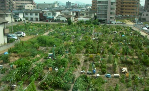 Farming Starts in Cities