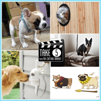 Take Five: Cool Dog Stuff - The Cottage Market