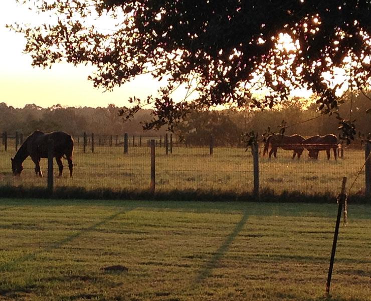 horses a