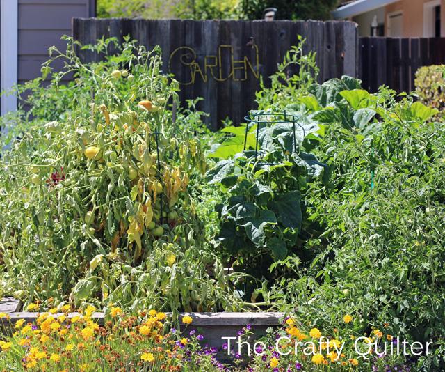 veggie garden front view copy