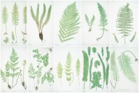 Ultimate Free Botanical Prints Guide - The Crazy Craft Lady