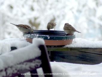 birds at water