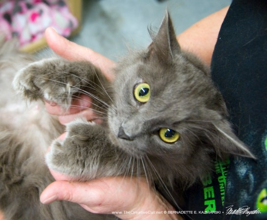 The gray mama kitty's big mittens.