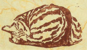 Tabbies-Fawnball-burgundy-natural-orangethread-print
