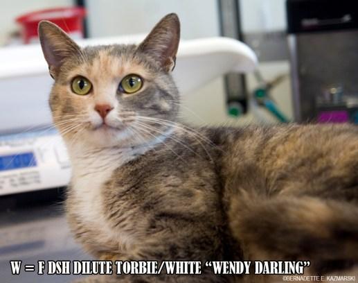 W-WendyDarling