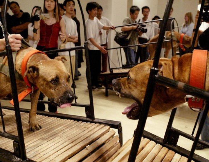Los perros que no pueden tocarse unos a otros