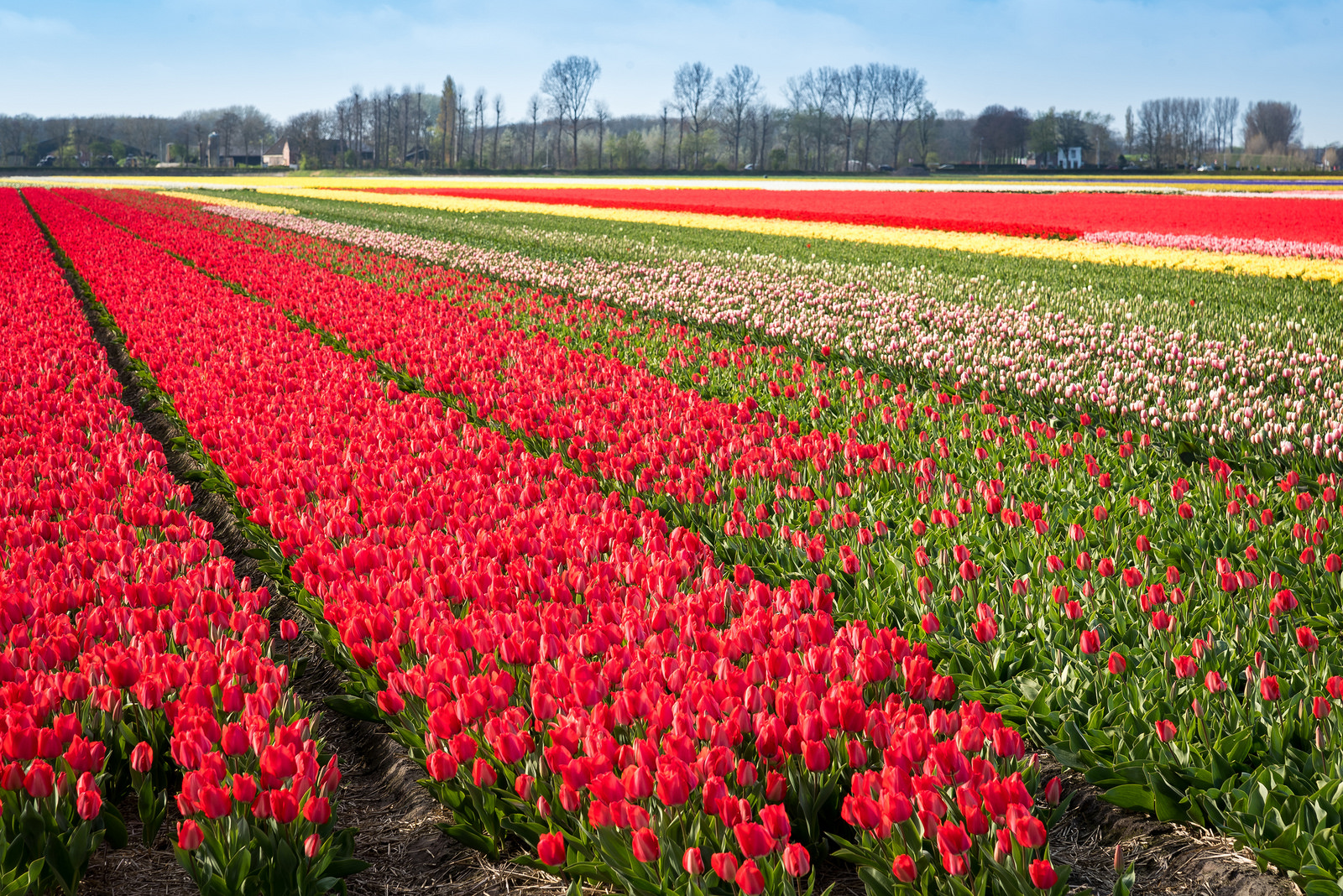 Tulpen Holland Keukenhof The Best Places To See Tulips In The Netherlands