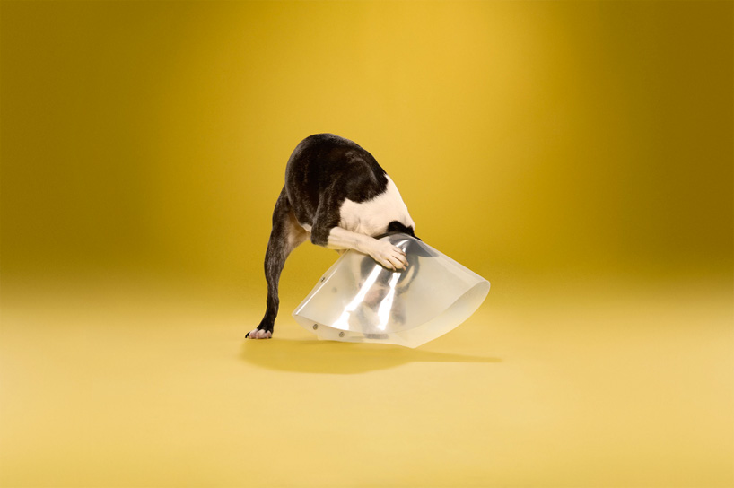 ty-foster-time-out-dogs-wearing-cones-designboom-05
