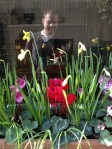cyclamen_daffodil_muscari_a-curious-gardener