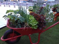 the-curious-gardener_airport Veg