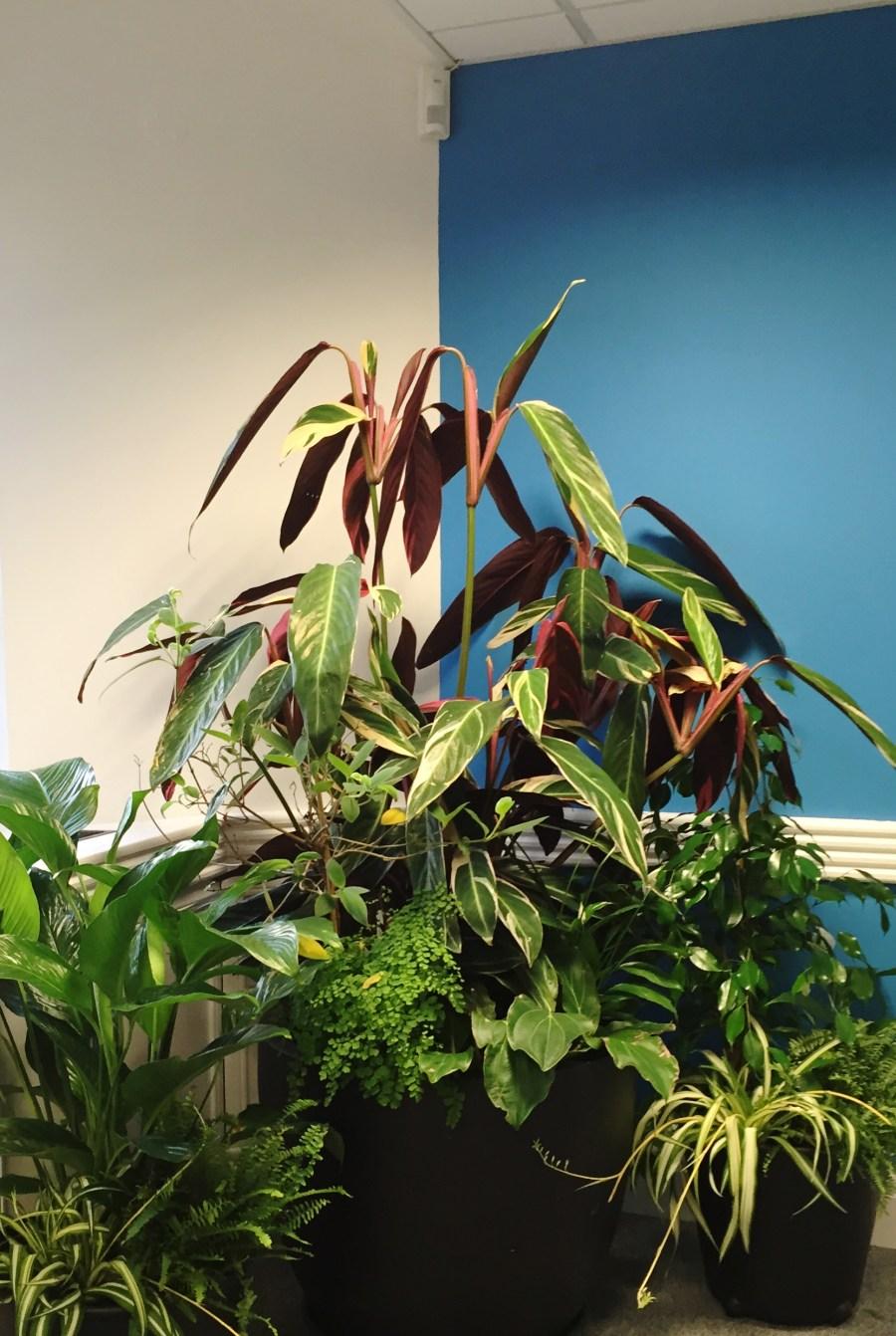 reduce-pollution-indoor-plant-office-houseplants-bespoke-design-curious-gardener-1