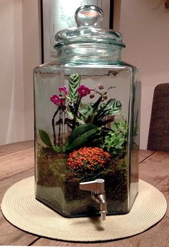 terrariums-london-greenwall-plant-home-houseplants-curious-gardener-close-2
