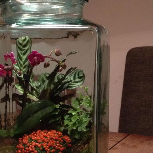 terrariums-london-greenwall-plant-home-houseplants-curious-gardener-close-88