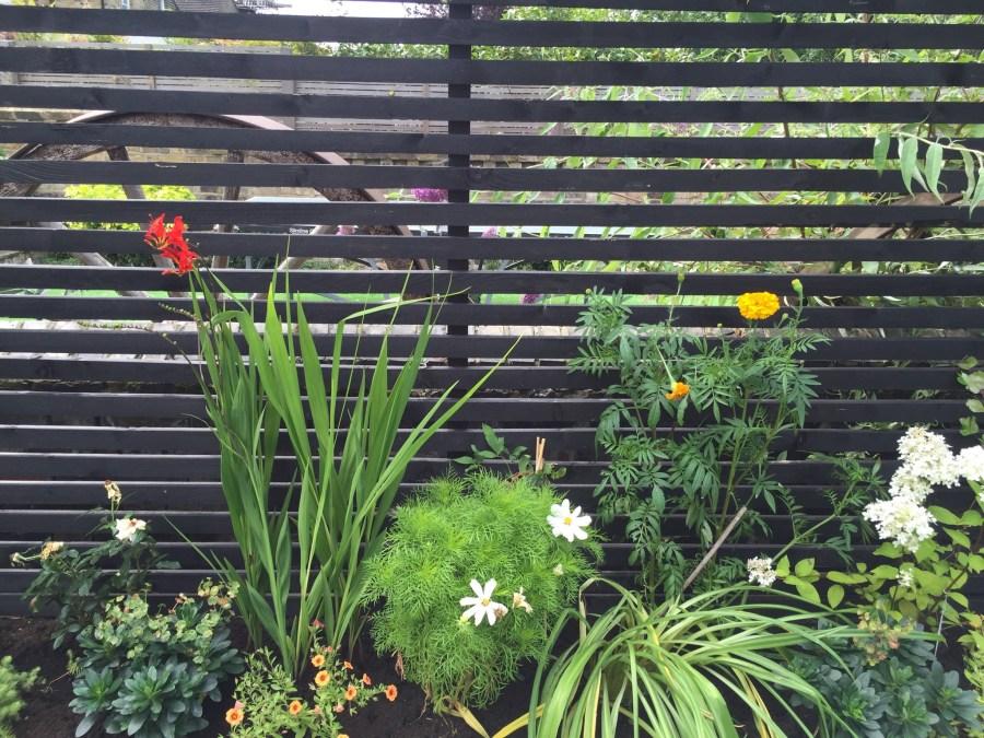garden design crouch end london (8)