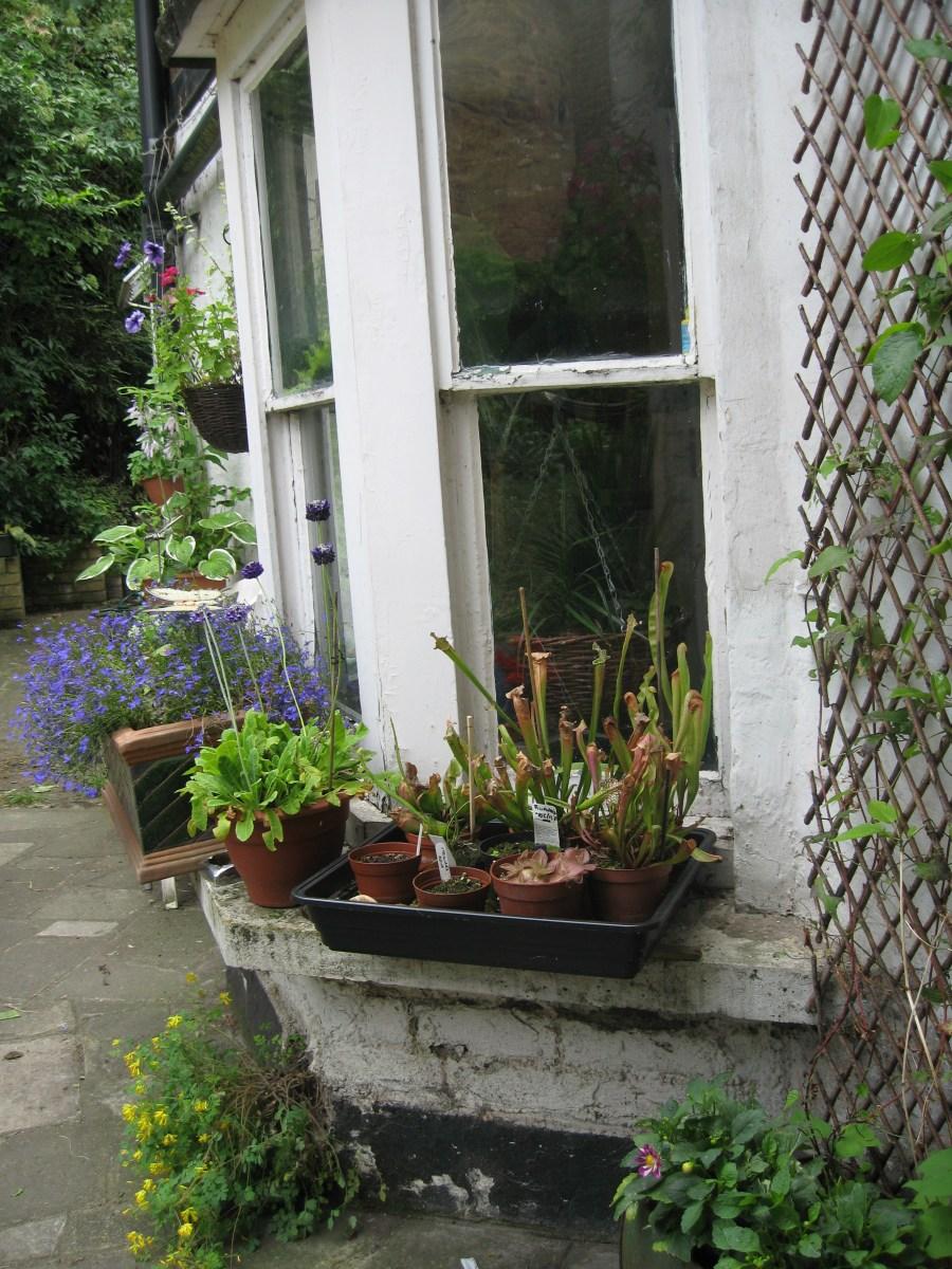gardening in finsbury park london (4)