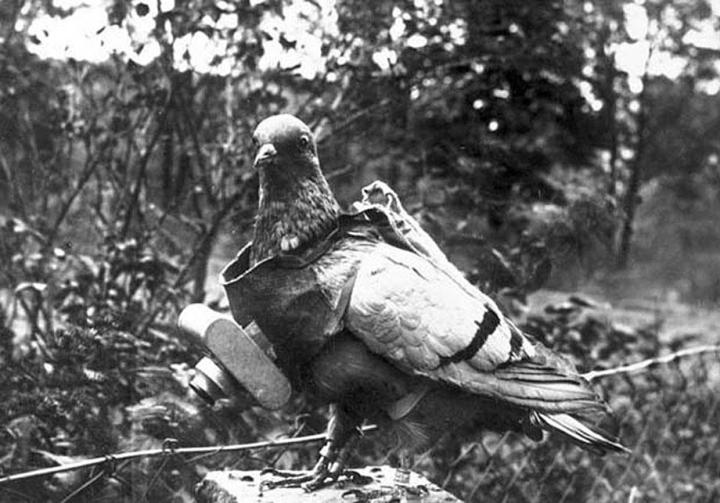 Pigeons were widely used for communication, but also for spying - note the camera on the pigeon. This method of spying was developed in 1912 by a German called Julius Neubronner