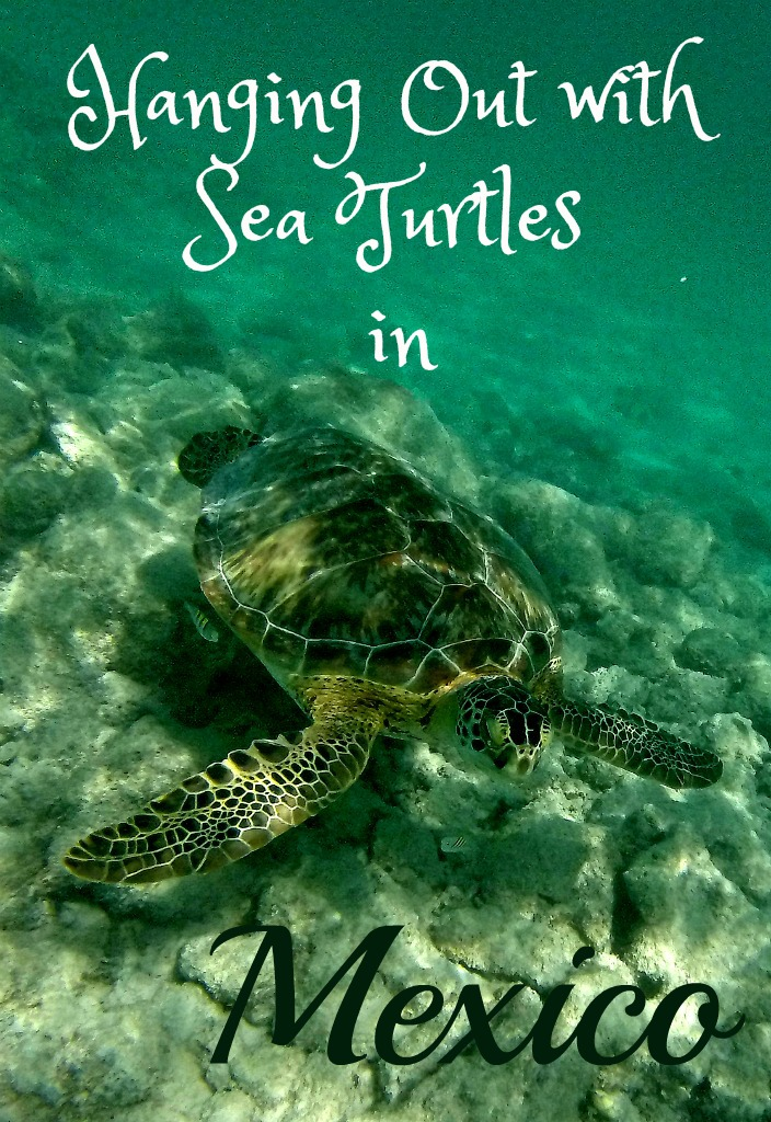 Playing with Sea Turtles Around Cancun and The Riviera Maya, Mexico