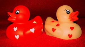 Valentine's ducks