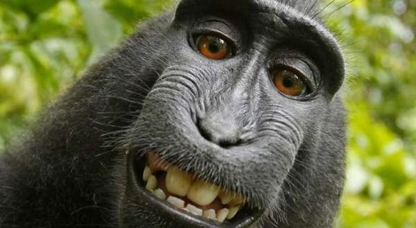 Monkey see, monkey sue?