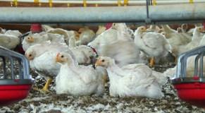Hogan vows to fight fertilizer regulations