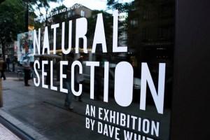 Recap: Dave White Natural Selection Exhibition Launch