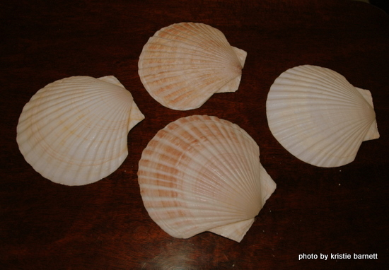 DSC 4477 1 Decorative Ideas for Seashells