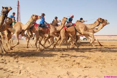 camel festival neil6