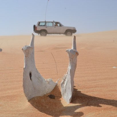 desert life2