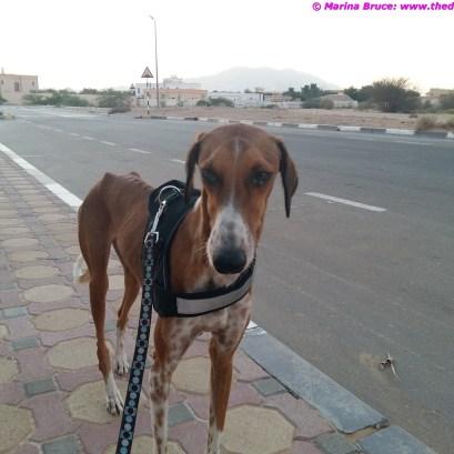 Walkies in Al Ain