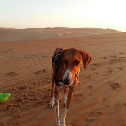 Rahaal loves the desert!